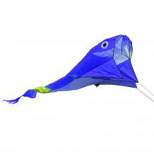Delfín modrý